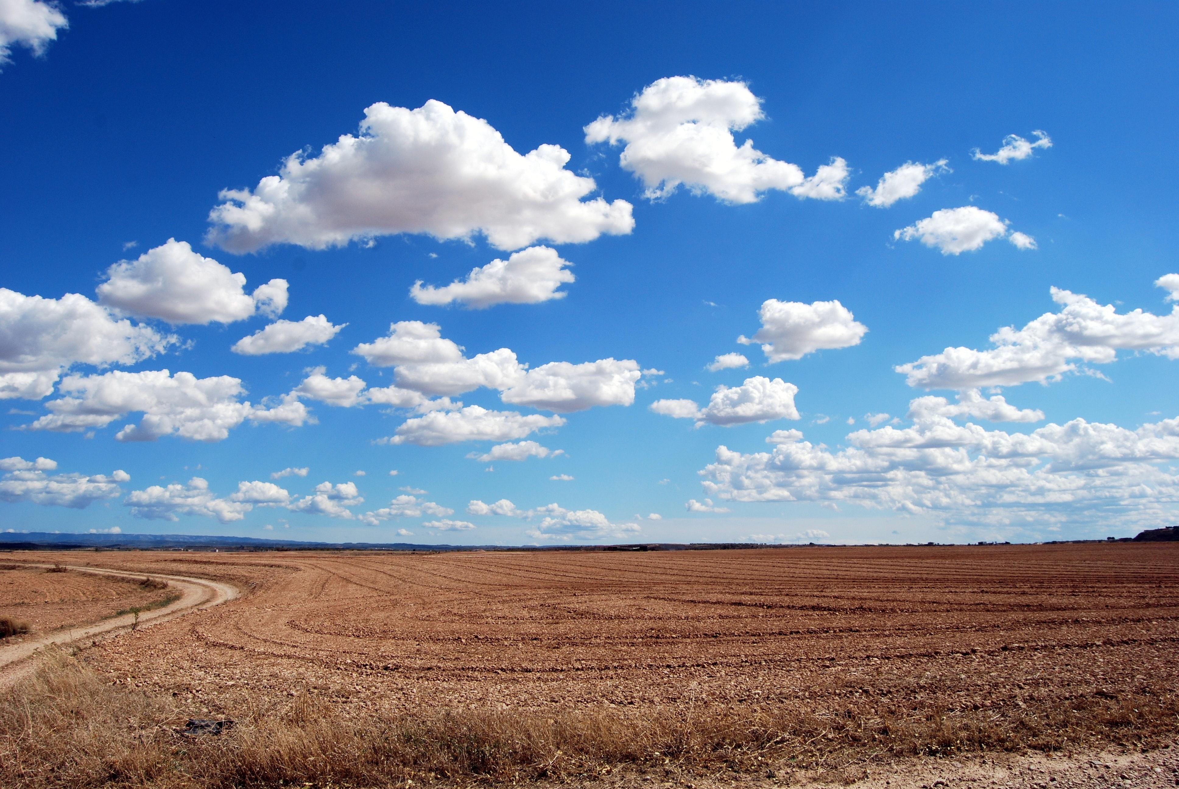agriculture-arid-bright-46160 (1)